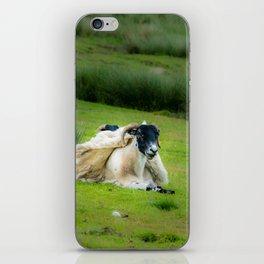 Wind sheared Sheep iPhone Skin
