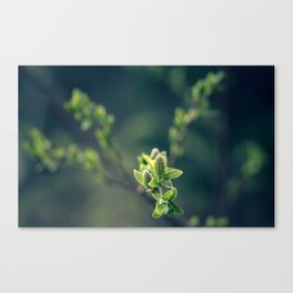 Cryo Green Canvas Print
