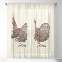 Wren Bird (Troglodytes Troglodytes) singing  a loud and beautiful song Sheer Curtain