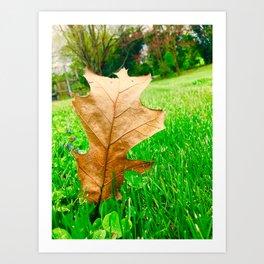 A Walk Through The Seasons Art Print