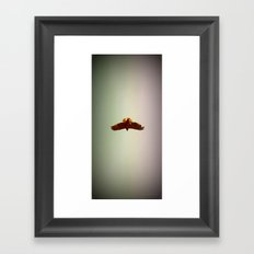 Hawk Eyes Framed Art Print