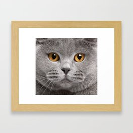 Cat in Grey Framed Art Print