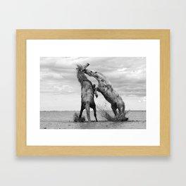 Wild Horses - Ocracoke Island, Hatteras, North Carolina black and white photograph / art photography Framed Art Print