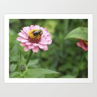 rileigh smirl Art Prints featuring Flower and Bee by Rileigh Smirl