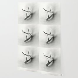 Lost and Found - Deer Antler Pencil Drawing Wallpaper