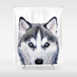 siberian husky2 Shower Curtain