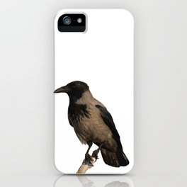 Hooded Crow Isolated iPhone Case