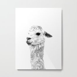 Black and white alpaca animal portrait Metal Print