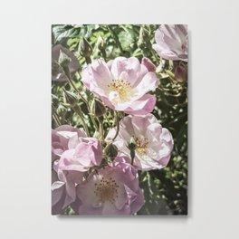 Cool And Luminous Summer Roses Metal Print