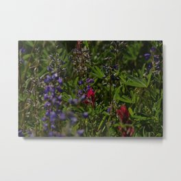 subalpine season Metal Print