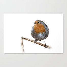 Robin red breast wildlife birds Canvas Print