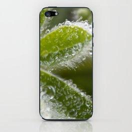 Morning Dew I iPhone Skin