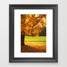 Golden Maple Fall  Framed Art Print