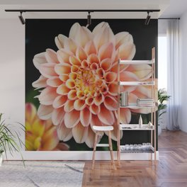 Light Orange Dahlia Wall Mural