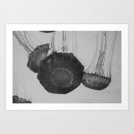 Jellyfish Basics no. 3 Art Print