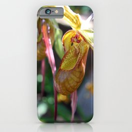 Lady Slipper Orchid II iPhone Case