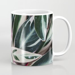 Stromanthe Triostar  |  The Houseplant Collection Coffee Mug