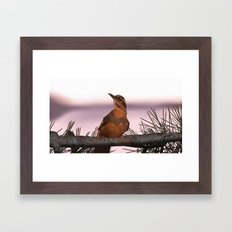 Opening bird Framed Art Print
