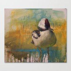 Ruddy Duck (Oxyura jamaicensis) Canvas Print