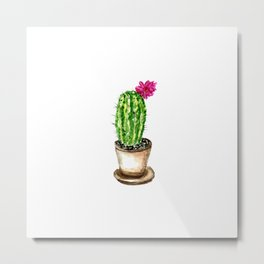 Blooming cacti on striped background Metal Print