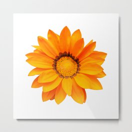 Orange Gazania Flower Metal Print