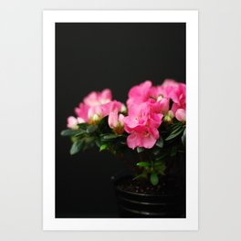 Flower - Pink & Black Art Print