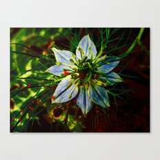 red insect attack Canvas Print