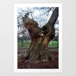 Sweet Chestnut Tree Art Print