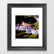 Grasshopper Insect Framed Art Print