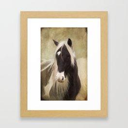 Gypsy cob Framed Art Print
