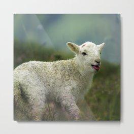 sweet little lamb Metal Print