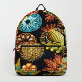 Sea Squirts (Ascidiacea) by Ernst Haeckel Backpack