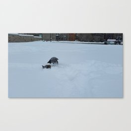 Wallace burry face snow Canvas Print