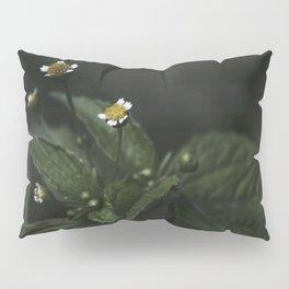 Botanical Still Life Chamomile Pillow Sham