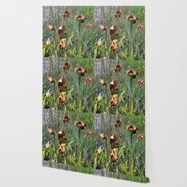 Pitcher Plants Wallpaper