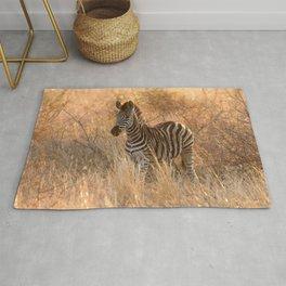 Zebra foal in morning light Rug
