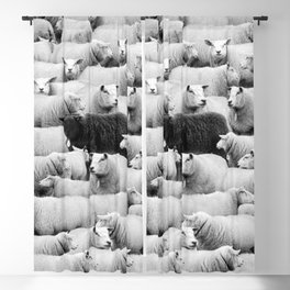 Different is 'Okay' Black Sheep of the Family black and white photograph Blackout Curtain