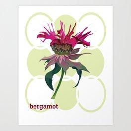 Bergamot Art Print