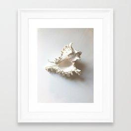 Conch Still Life Framed Art Print