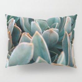 Graptoveria Study #4 Pillow Sham