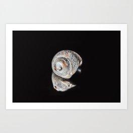 Broken Sea Shell Art Print