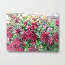More Flowers in St. Andrews Metal Print