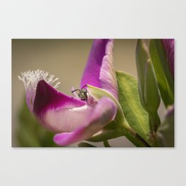 Peeking Canvas Print