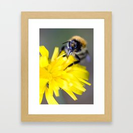 Busy buzzy bumble bee Framed Art Print