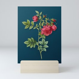 Vintage Blooming Turnip Roses Botanical Illustration on Teal Mini Art Print