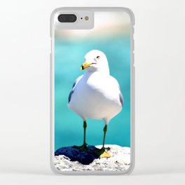 Grotto Seagull Clear iPhone Case