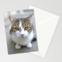 Larry the Downing Street Cat Stationery Cards
