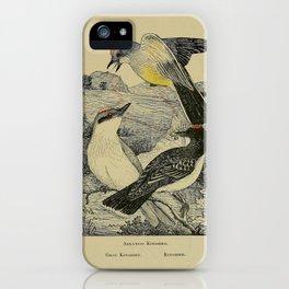 Arkansas Kingbird Gray Kingbird Kingbird10 iPhone Case