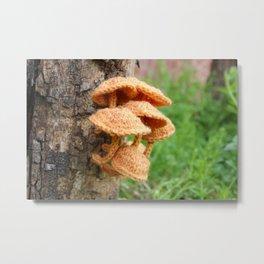 Knitted Velvet Foot Fungi Metal Print