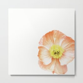 Pink Poppy No. 3 | Flower Photograph Metal Print